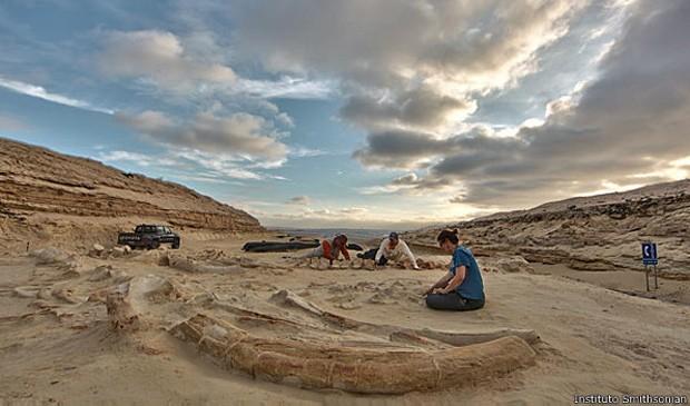 Centenas de fósseis de baleia ainda precisam ser analisados em Cerro Ballena (Foto: Instituto Smithsonian/BBC)