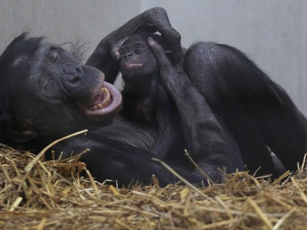 Mãe brinca com o filhote de chimpanzé (Foto: Frank Augstein/AP)