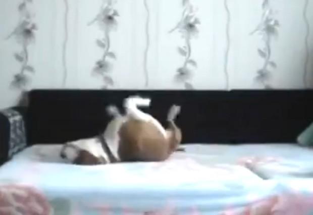 Cão 'fez a festa' e aproveitou ausência do dono para brincar em cama que não podia subir (Foto: Reprodução/LiveLeak/noxomus )