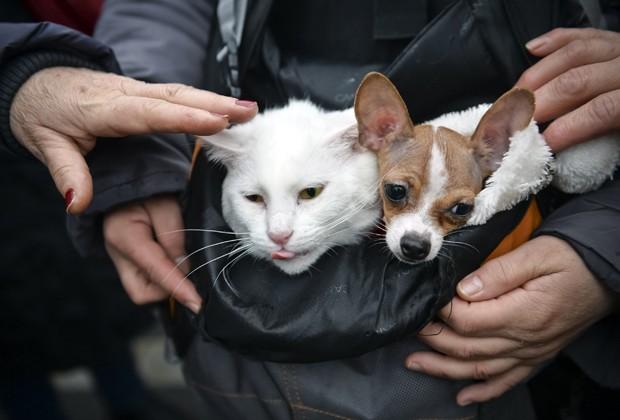 Cão e gato dividem a mesma bolsa enquanto são carregados durante protesto em Bucareste, na Romênia (Foto: Andreea Alexandru/AP)