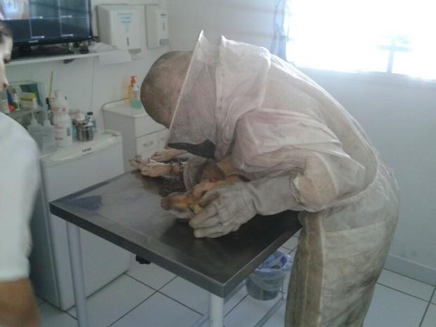 Cão chegou à clínica já em choque anafilático (Foto: Bombeiros de Mairinque/Divulgação)