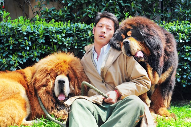 Mastins tibetano à esquerda foi vendido por mais de R$ 4,4 milhões em evento na China (Foto: STR/AFP)
