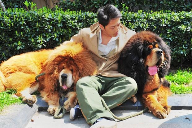 Animais são famosos devido a semelhanças com um leão (Foto: STR/AFP)