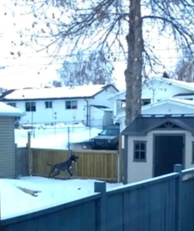 Cachorro tentando 'salto impossível' para alcançar galhos de árvore virou sensação na web (Foto: Reprodução/YouTube/Adam Michaleski)