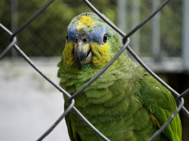 Animais foram cadastrados em um banco de dados com zoológicos de todo país (Foto: Abinoan Santiago/G1)