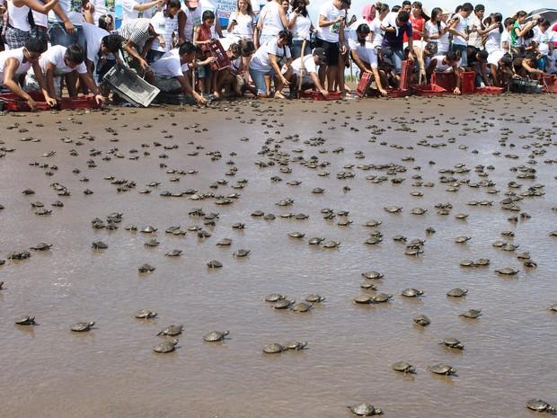 Em Afuá, no Pará, área protegida pelo Ibama do Amapá, foram soltos mais de 100 mil quelônios (Foto: Eliazar Bezerra/Ibama)