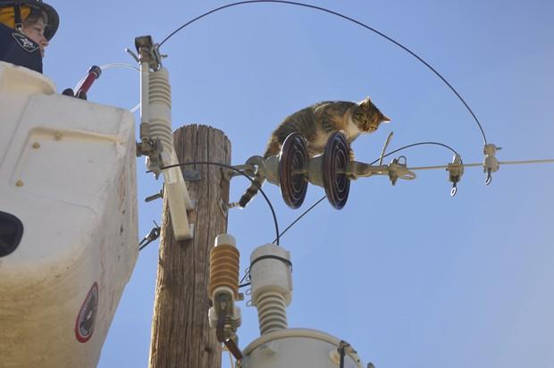 Funcionária sobe no topo de poste para resgatar gata 'Athena' em Las Cruses, no Novo México (EUA) (Foto: The Las Cruces Sun-News, Carlos Javier Sanchez/AP)