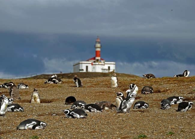 Ilha Magdalena, no Chile, está ameaçada por aquecimento global, segundo administradores da reserva (Foto: AFP PHOTO / VANDERLEI ALMEIDA)