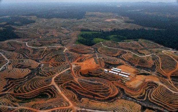 Imagem feita em 24 de fevereiro durante sobrevoo na região de de Bornéu mostra desmatamento em área concedida a empresa fabricante de óleo de palma (Foto: Bay Ismoyo/AFP)