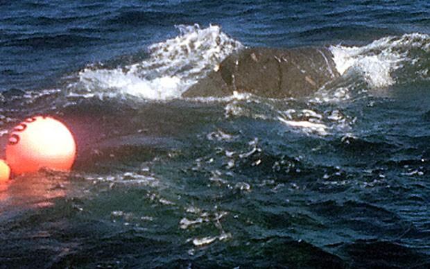 Baleia jubarte foi flagrada presa a redes de pesca e boias vermelhas perto da ilha de Niihau, no Havaí (Foto: AP/Courtesy Holoholo Charter)