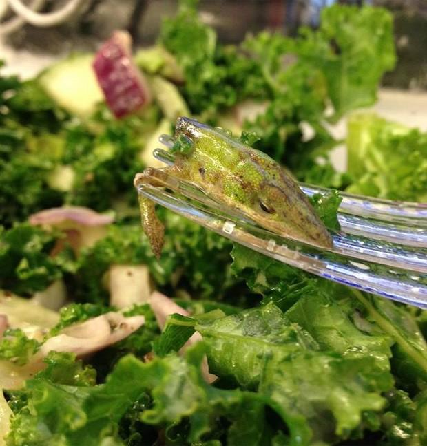 Americana ficou chocada ao encontrar cabeça de lagarto em salada de restaurante em Nova York, nos EUA (Foto: Reprodução/Facebook/Johnny Pomatto)