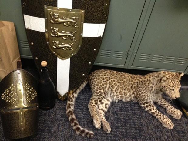 Grupo de jovens roubou sem saber um leopardo empalhado avaliado em US$ 250 mil (Foto: Los Angeles County Sheriff's Department/AP)
