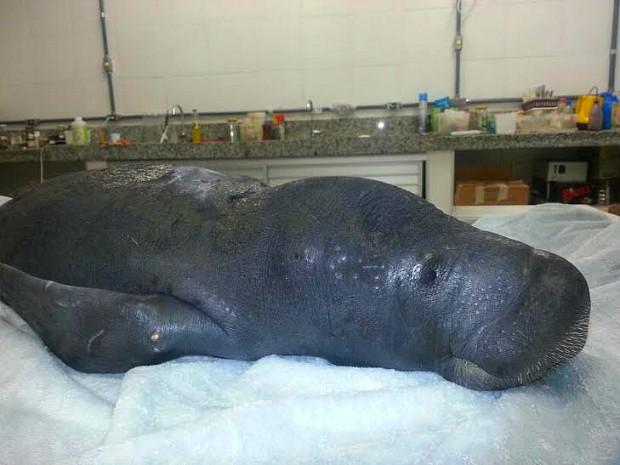 Animal foi resgato com lesões pelo corpo (Foto: Séfora Antela/Ampa)