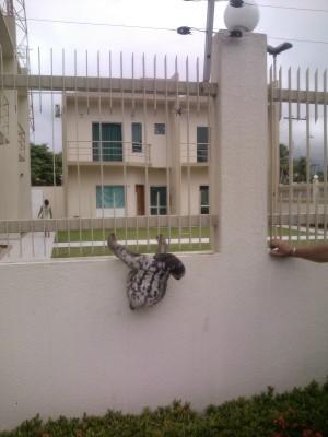 Preguiça foi resgatada em condomínio (Foto: Divulgação/Ipaam)