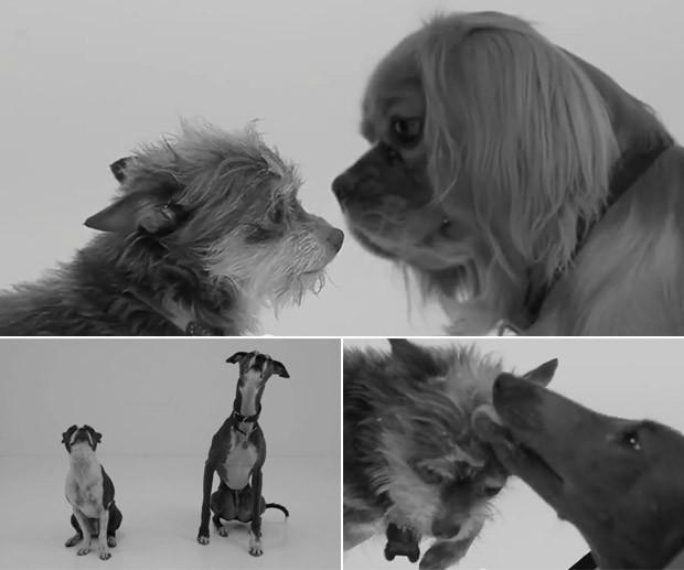 Montagem mostra cenas capturadas do vídeo 'First sniff' (Foto: Reprodução/YouTube)