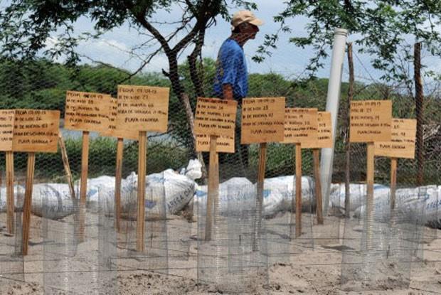 52 jabutis da Revecom foram remanejados (Foto: Abinoan Santiago/G1)