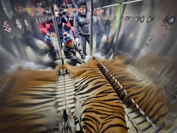 População da espécie na natureza caiu 60% desde os anos 1970 (Foto: BBC)