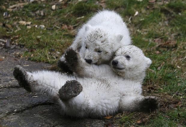 Gêmeos, ursos têm 14 semanas de vida e ainda não foram batizados (Foto: Michael Dalder/Reuters)