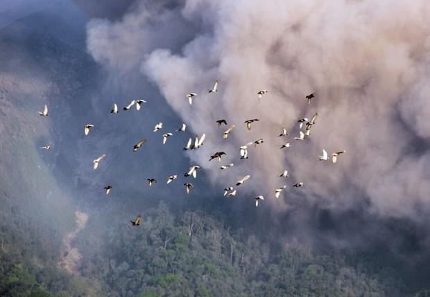 Calor e vapor dos vulcões permitiram que espécies sobrevivessem (Foto: AFP/ Peter Convey/ British Antarctic Survey)