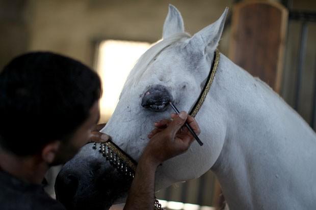 Égua ganhou até maquiagem antes de 'encontro amoroso' em fazenda (Foto: Abbas Momani/AFP)