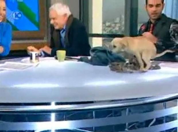 Cãozinho fez cocô em cima da bancada durante programa ao vivo (Foto: Reprodução/YouTube/asulintomer)