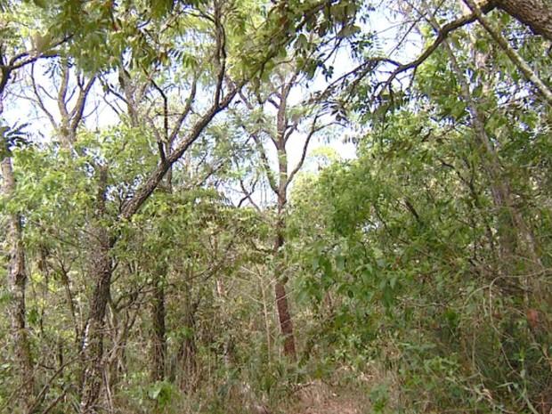 Cerrado em Itirapina (Foto: César Fontenele/EPTV)