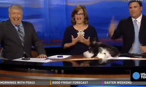 Trio de apresentadores enfrentou 'saia justa' quando coelhos começaram ato sexual ao vivo em cima da bancada de jornal nos EUA (Foto: Reprodução/YouTube/MADVEIWS)