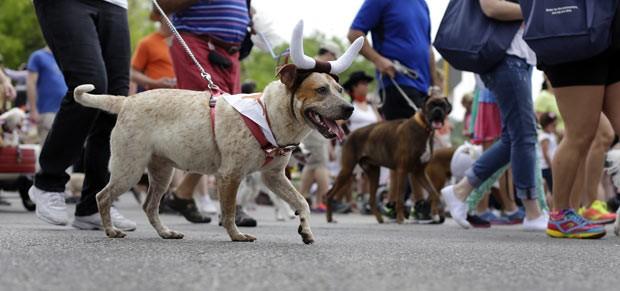 Cachorro ganha 'chifres' em parada canina nos EUA (Foto: Eric Gay/AP)