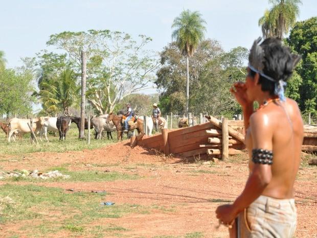 Trabalhadores retiram gado de área ocupada por índios em MS (Foto: Tatiane Queiroz/G1 MS)