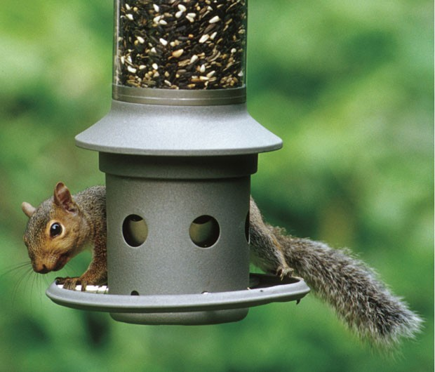 Alimentador especial promete ser à prova de esquilos 'espertinhos' (Foto: Wild Birds Unlimited/AP)