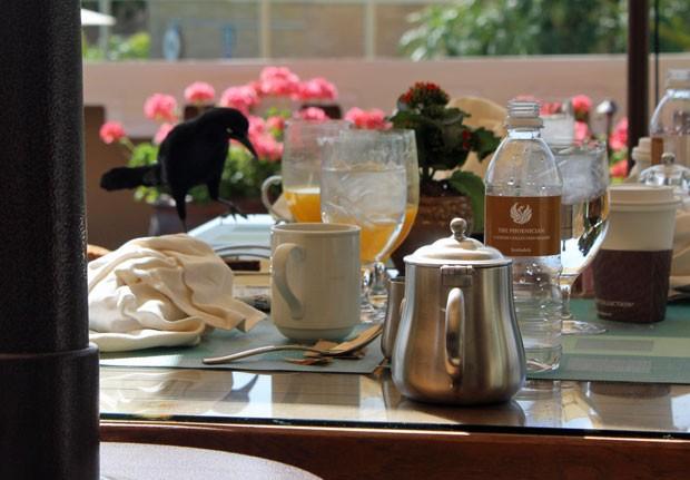 Aves invasoras 'atacam' café da manhã (Foto: Dennis Barbosa/G1)