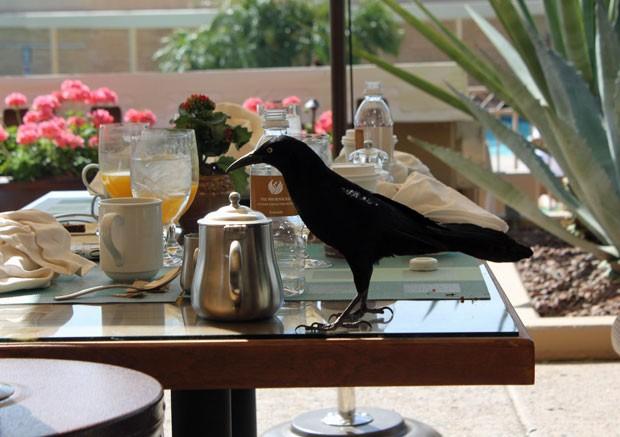 Ave se delicia com café da manhã no resort de luxo (Foto: Dennis Barbosa/G1)