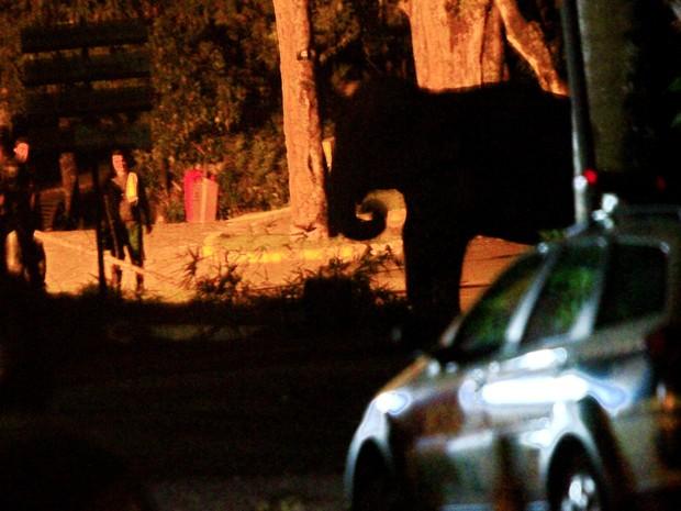 Visitantes da Bica, em João Pessoa, tiveram que ser evacuados enquanto a elefanta Lady ficou solta por quatro horas (Foto: Kleide Teixeira/G1)