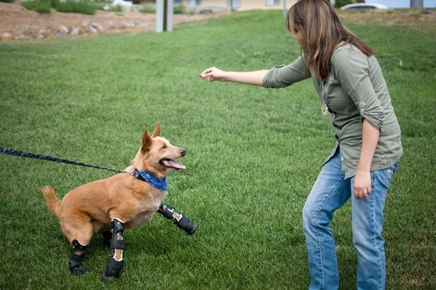 Naki'o diverte-se com veterinária Christie Pace (Foto: AP Photo/OrthoPets, Lindsey Mladivinich)
