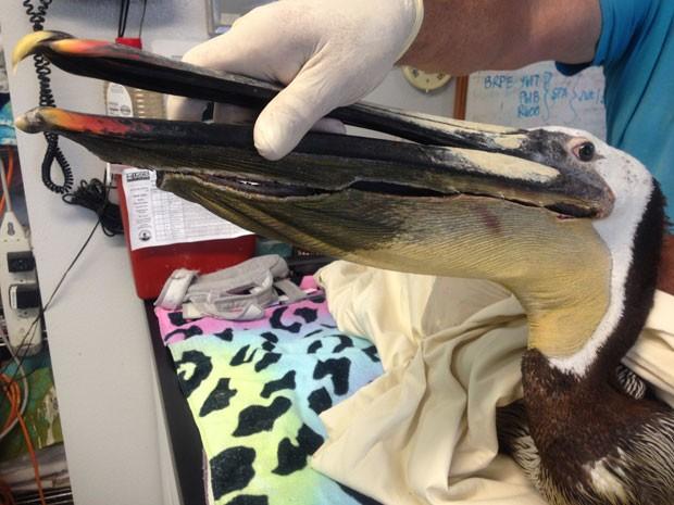 Animal que se alimenta de peixes ficou muito machucado (Foto: International Bird Rescue/AP)