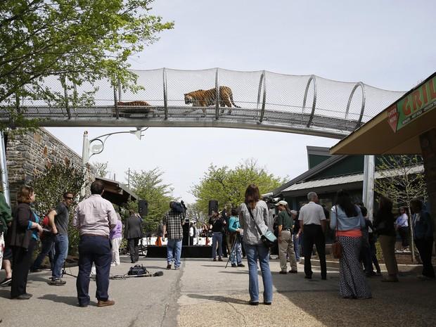 Passarela fica a quatro metro de altura do público na entrada principal do zoo (Foto: Matt Slocum/AP)