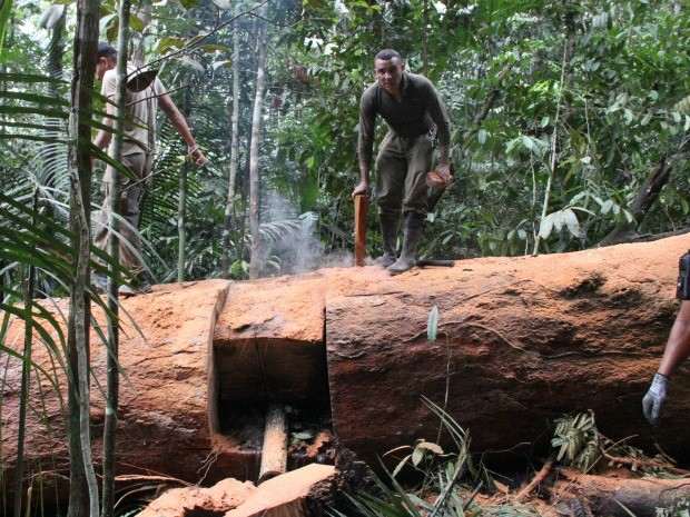 Árvore de cerca de 35 metros de altura e 500 anos de vida foi destruída pelas chamas (Foto: Adneison Severiano/G1 AM)