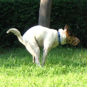 Homem é procurado após atacar britânica com sacola de fezes de cachorro na Inglaterra (Foto: Minghong/Wikimedia)