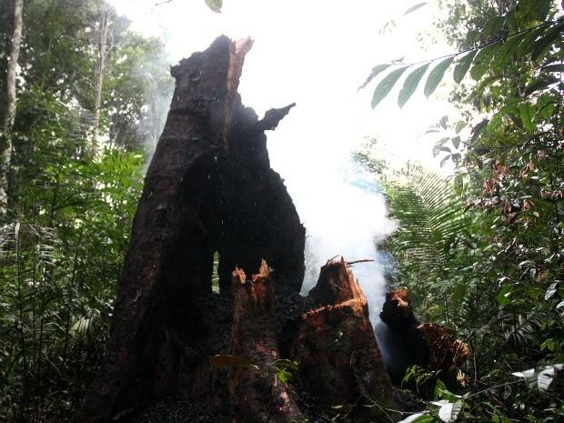 Angelim Pedra foi completamente consumido pelas chamas (Foto: Marcos Dantas/G1 AM)