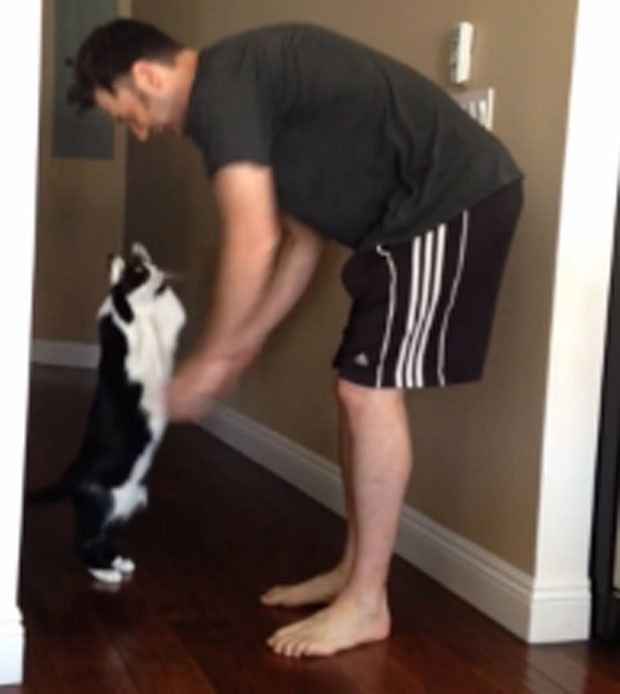 Gato virou hit ao se levantar e 'se esticar' para ganhar abraço do dono em vídeo (Foto: Reprodução/YouTube/Tricia Carr)