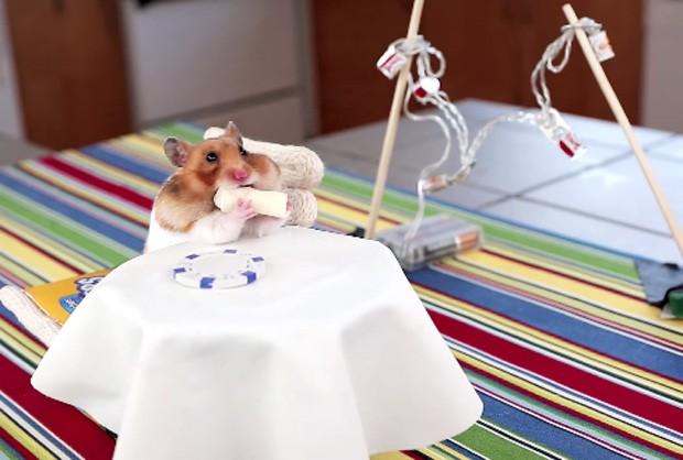 Hamster foi gravado durante 'jantar gourmet' e devorou burritos em miniatura com direito a mesa improvisada (Foto: Reprodução/YouTube/Hello Denizen)