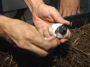Jacaré nascimento 2 (Foto: Reprodução/TV TEM)