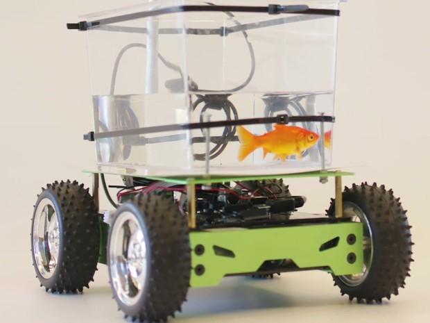 Uma câmera capta a cor laranja do peixe e como um sensor faz com que o movimento do peixinho mova o protótipo (Foto: BBC)