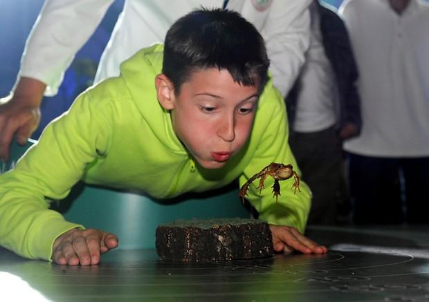 Leo Gregov, de 16 anos, faz seu sapo 'Helga' pular durante competição em Lokve, na Croácia (Foto: STR/AFP)