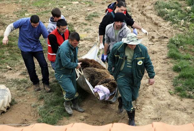 No santuário de Pristina, os cuidadores tratam de seis ursos em fase adulta e mais três pequenos filhotes. Todos foram resgatados pelo país (Foto: Hazir Reka/Reuters)