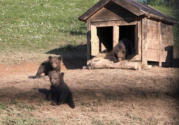 Filhotes de urso-pardo que foram encontrados em diversas áreas de Kosovo (Foto: Hazir Reka/Reuters)